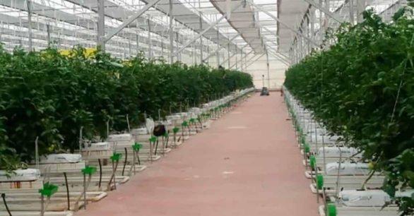 Agro Plant – Gürcistan